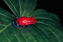 The bright hues of some species may be a method of defense from predators.