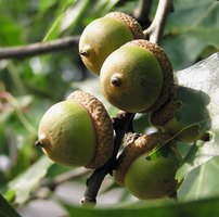 How To Identify Oak Trees In Georgia Ehow