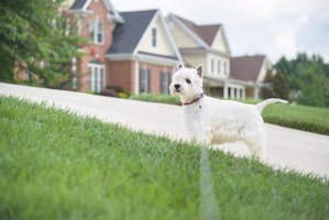 natural products to stop dogs from pooping in the yard thumbnail