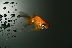 Why do fish breathe slower in cold water ehow for Can fish drown