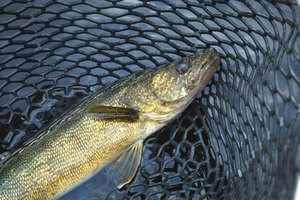minnesota top five fishing lakes ehow