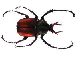 Bugs That Eat Sheetrock Ehow
