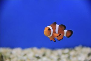 How to clear up cloudy water in fish tanks ehow for How to fix a cloudy fish tank
