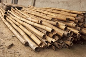 How to dry bamboo ehow for Uses for bamboo canes