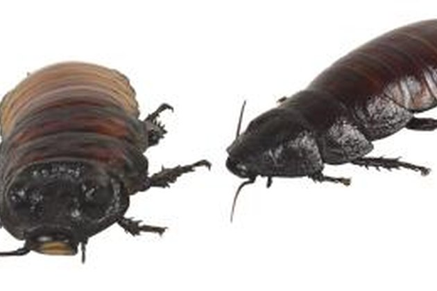 bedbugs lice and ticks who Stop fleas ticks mites bed bugs house & dog this non toxic bug treatment has shown to be effective on fleas, ticks, mites, mange, cockroaches, bed bugs.