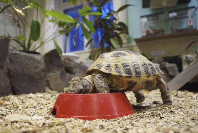 turtle eating from bowl(Enskanto/iStock/Getty Images)