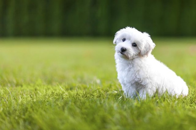 The Best Dog Breed for Low Shedding & Smell (with Pictures ...
