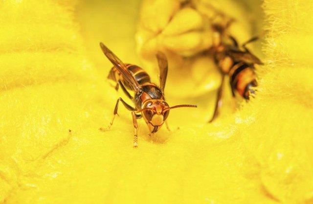 how to get rid of wasps underground nest