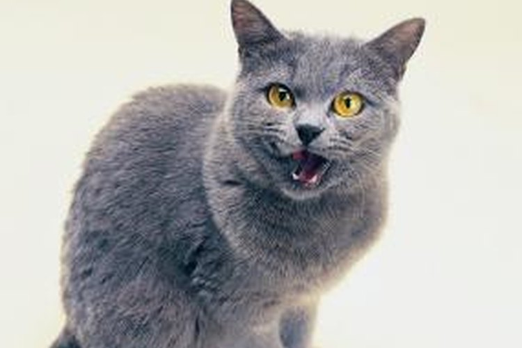 cat frequent urinary tract infections