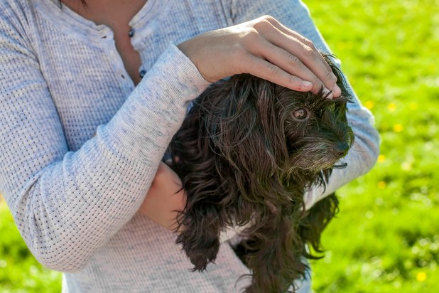 Signs & Symptoms of Final Stages of Canine Lymphoma | eHow | 618 x 412 jpeg 64kB