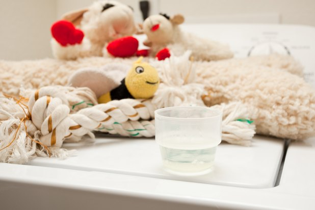 Can You Wash Dog Toys With Laundry Detergent