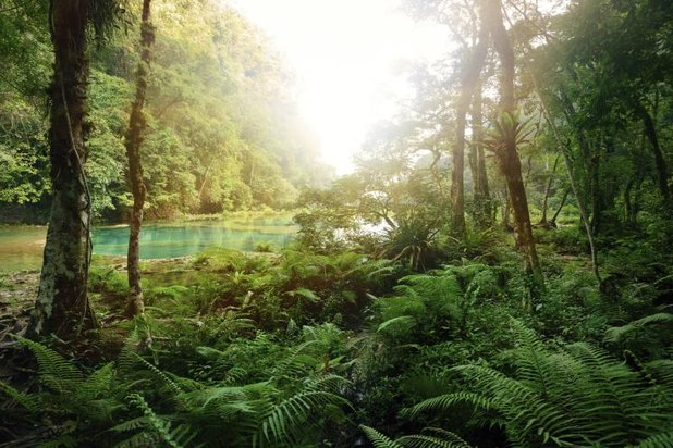 Research paper on tropical forests