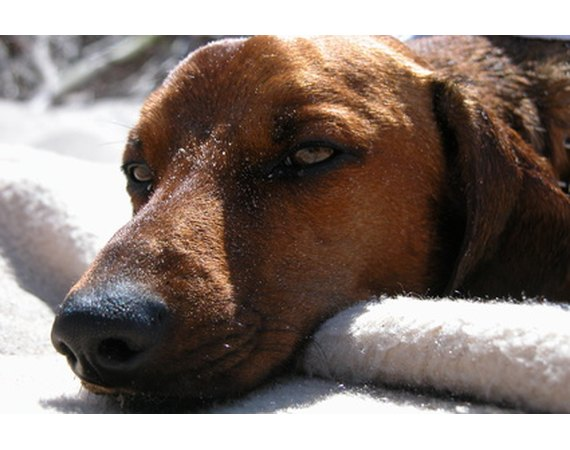 Dog Behavior: Peeing in the Bed