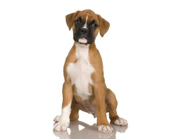 How to Train Your Boxer Not to Jump
