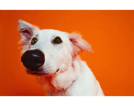 Rubber Flooring for Dog Training