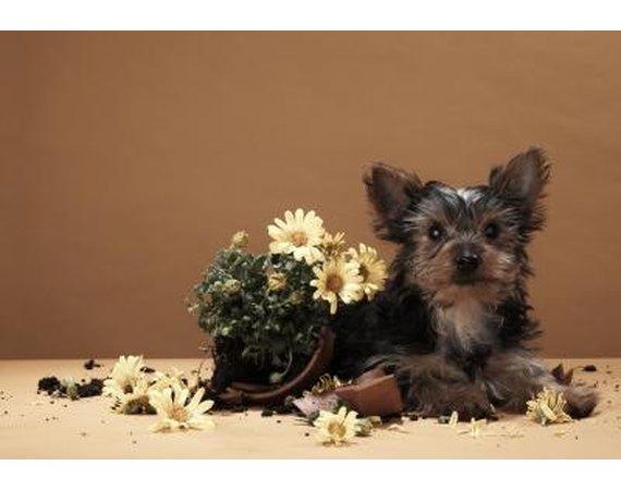 How to Get a Dog to Stop Digging Up Potted Plants