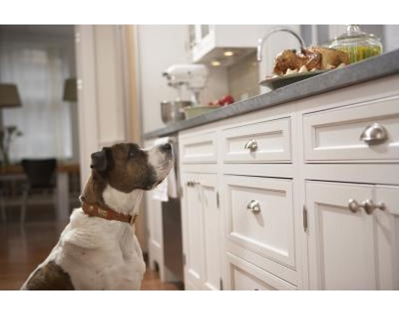 How to Get a Dog to Stop Eating Food From the Counters