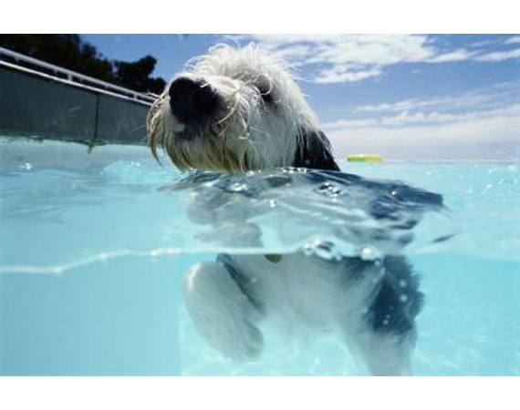 How to Keep a Dog Away From an Aboveground Pool