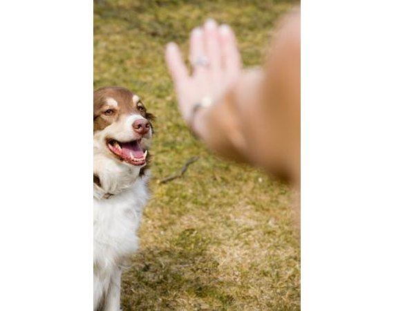 Teaching Your Dog to Look When Heeling
