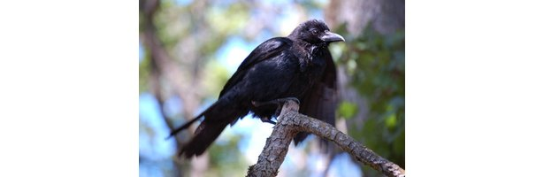 how to make a crow costume