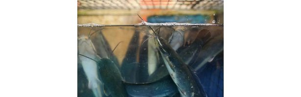 How to raise fish in an above ground swimming pool ehow for Raising fish in a swimming pool
