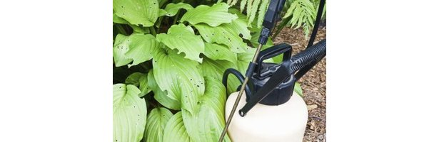 how to stop bugs from eating plants