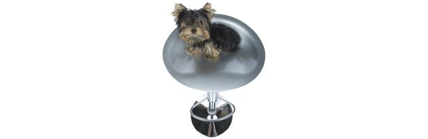 Home » Yorkie Poos Ehow How To Videos Articles More Discover The