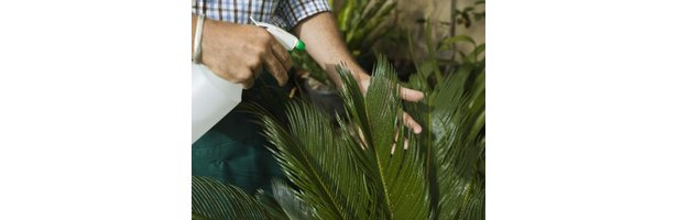 how to get rid of spiders on plants