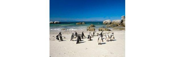 How Do Penguins Sleep Ehow