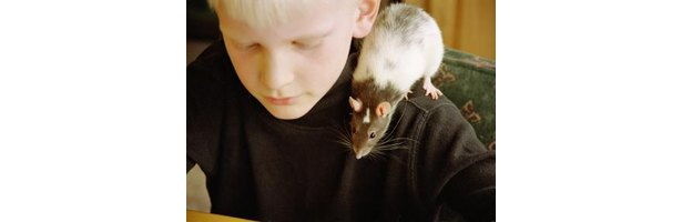 An argument in favor of animal testing for medical purposes and development