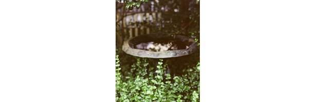 How to Make a Bird Bath Using a Lightweight Cement thumbnail