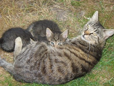 When your cat is pregnant, you want to give her the extra care that's needed ...