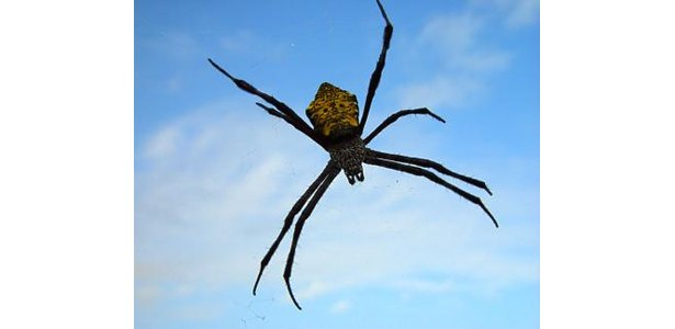 Northeastern Pennsylvania Spiders http://www.ehow.com/facts_6725388_poisonous-spiders-northeast.html