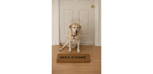 How to Greet a Visiting Dog Into My Home thumbnail