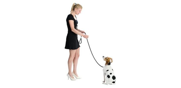 Dog Socialization Techniques thumbnail