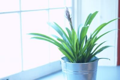 How to Kill a Houseplant's Fuzzy Mold With Vinegar thumbnail