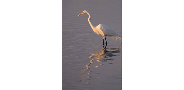 PVC Egret Pattern http://www.ehow.com/how_8753660_make-egrets-pvc.html