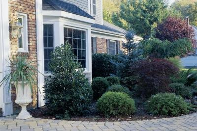 Other landscaping visual cues foundation plantings fake for How to plant bushes in front of house