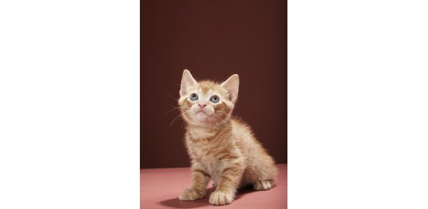When Can a Kitten Use Clumping Litter? thumbnail