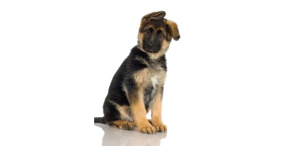 dog also am maximum dogs am on travel dog breeds
