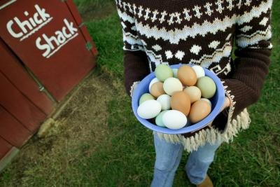 How to Register to Sell Chicken Eggs to Stores in Michigan