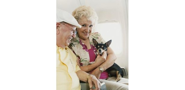 How to Travel With Your Dogs on Planes thumbnail