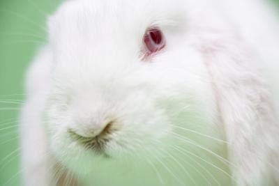 Albino Red Eyes Human http://www.ehow.com/info_10019155_behavioral-traits-dwarf-albino-bunnies.html