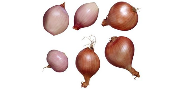 How to Raise Shallots From Seeds thumbnail