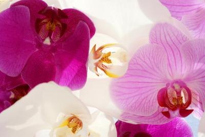 How to Make Orchid Bouquets & Arrangements thumbnail