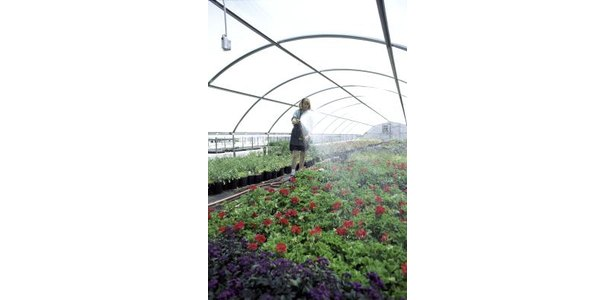Propagation Misting Systems : Intermittent mist system for plant propagation