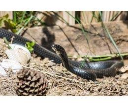 Homemade snake traps photo santy gibson demand media