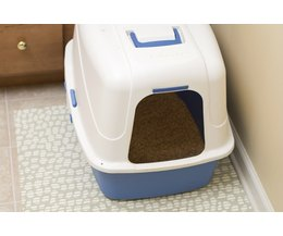 Cat Stopped Urinating In Litter Box