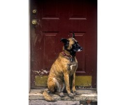 how to keep dog from jumping on door