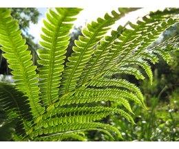 moss and fern similarities essay